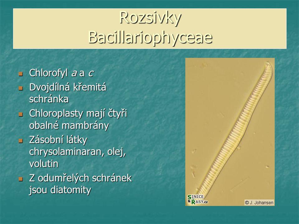 Rozsivky Bacillariophyceae
