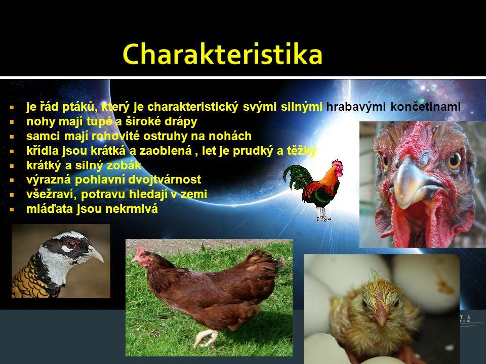 Charakteristika je řád ptáků, který je charakteristický svými silnými hrabavými končetinami. nohy mají tupé a široké drápy.