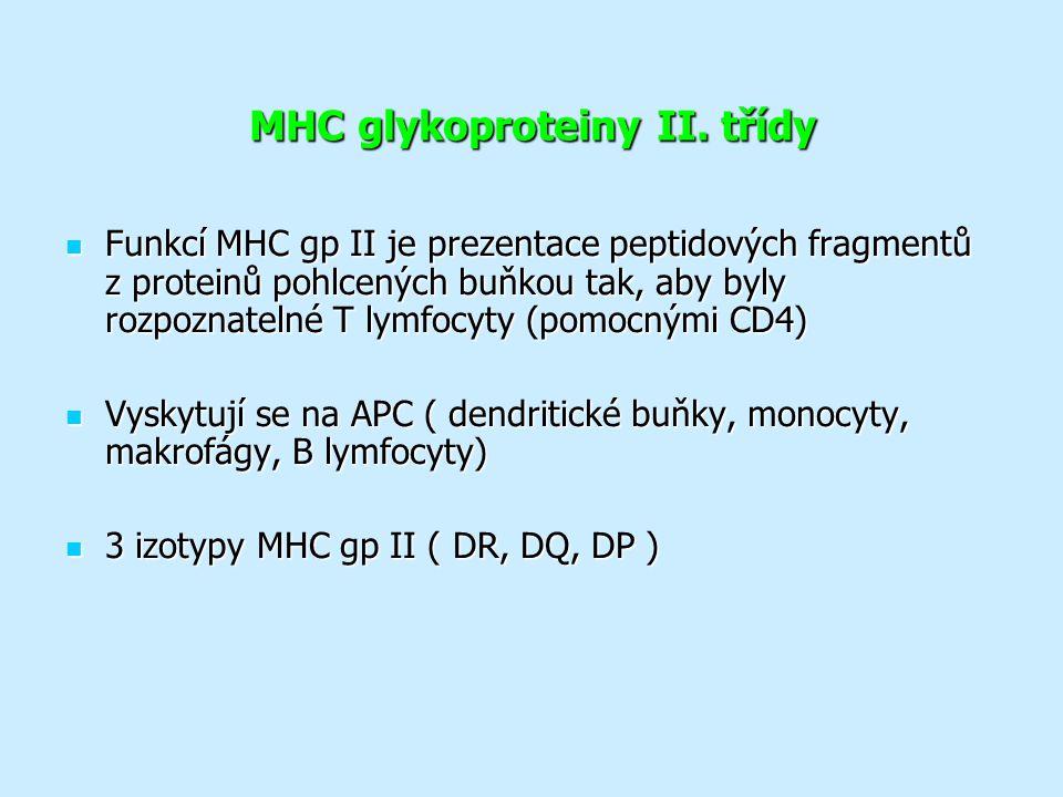 MHC glykoproteiny II. třídy