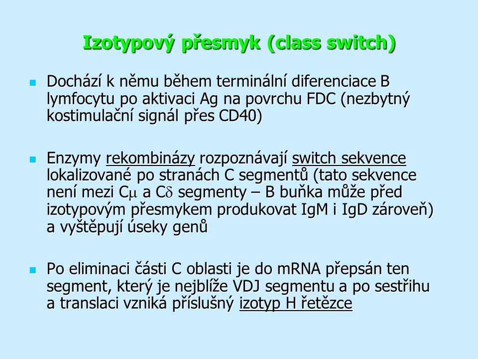 Izotypový přesmyk (class switch)
