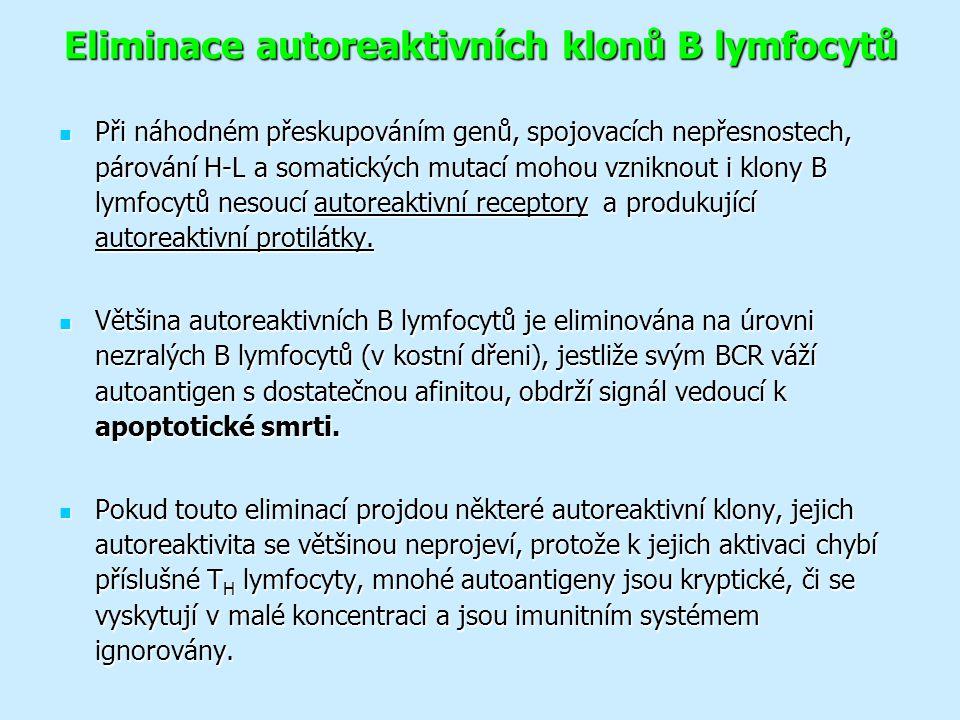 Eliminace autoreaktivních klonů B lymfocytů