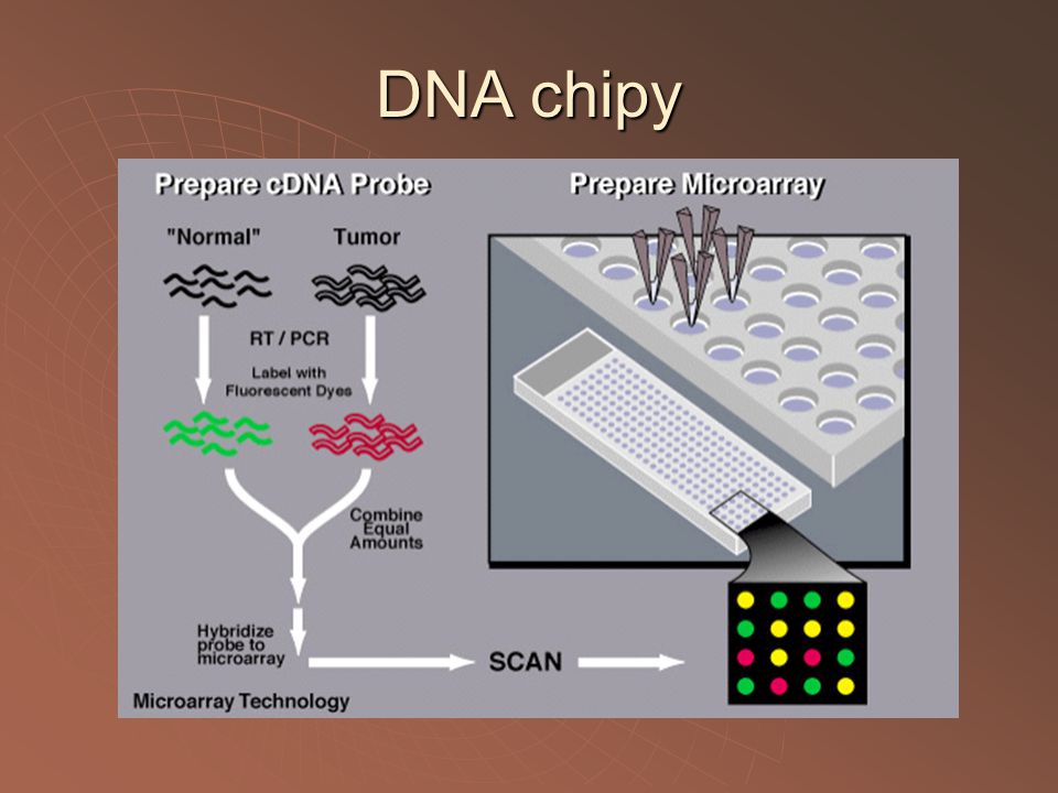 DNA chipy