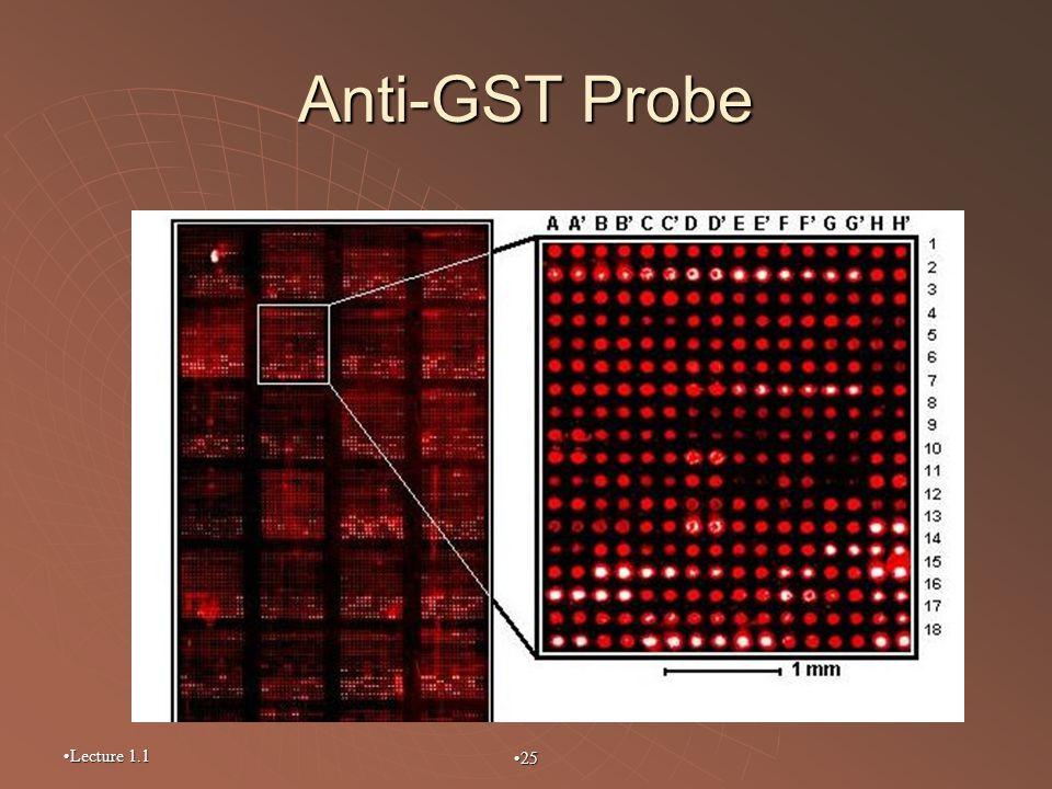 Anti-GST Probe Lecture 1.1