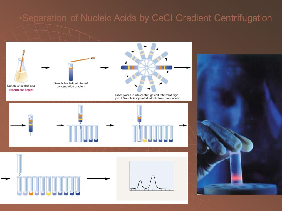Separation of Nucleic Acids by CeCl Gradient Centrifugation