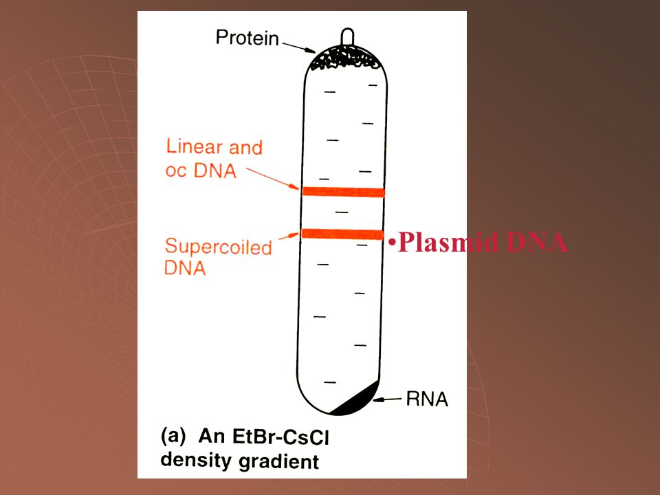 Plasmid DNA Brown p.44