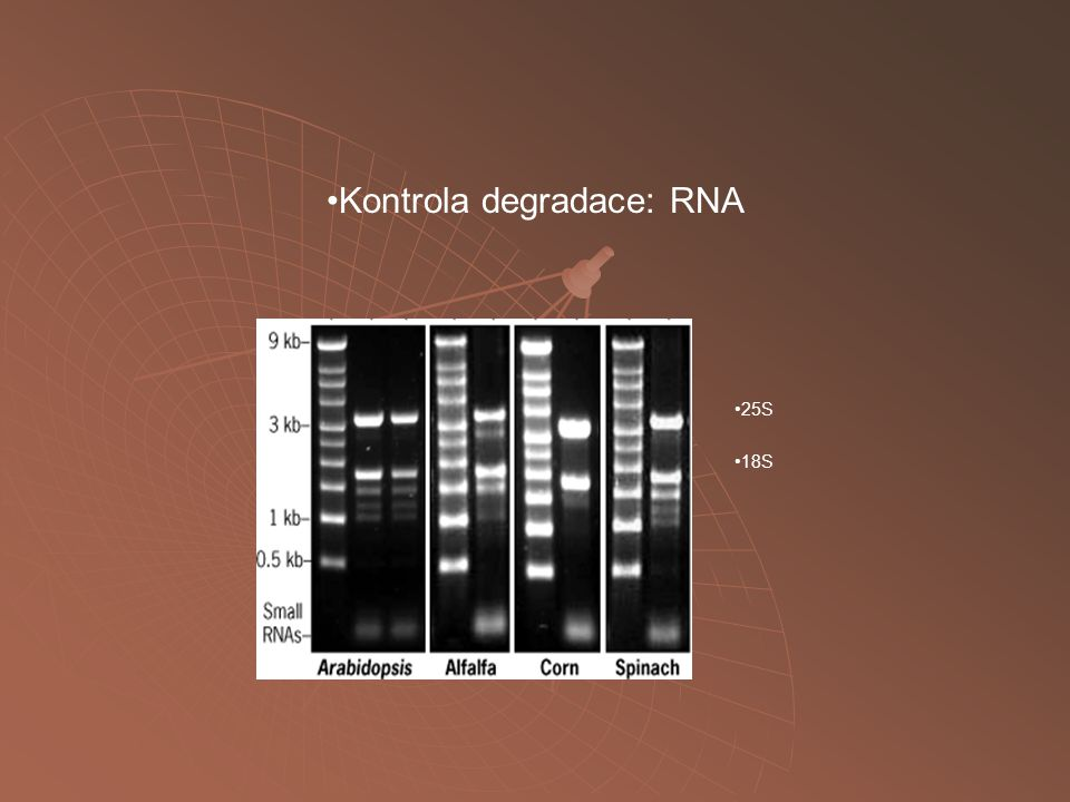 Kontrola degradace: RNA