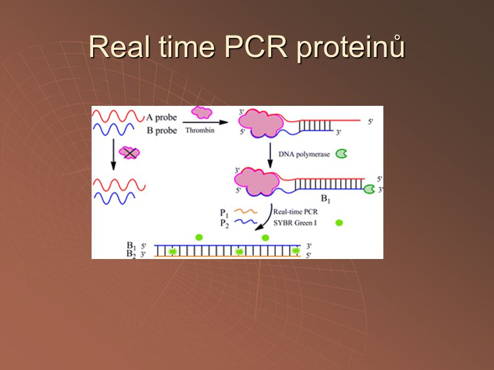 Real time PCR proteinů