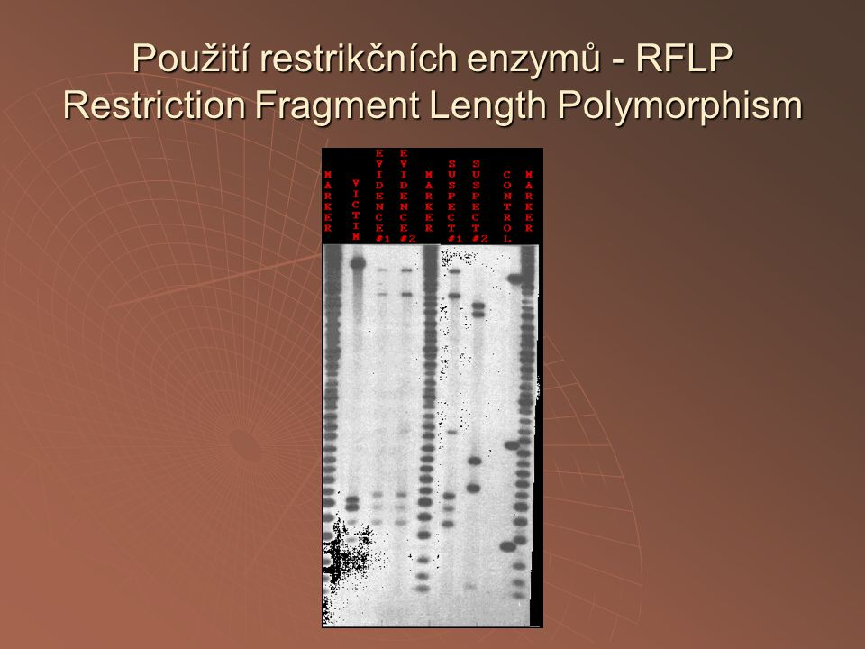 Použití restrikčních enzymů - RFLP Restriction Fragment Length Polymorphism
