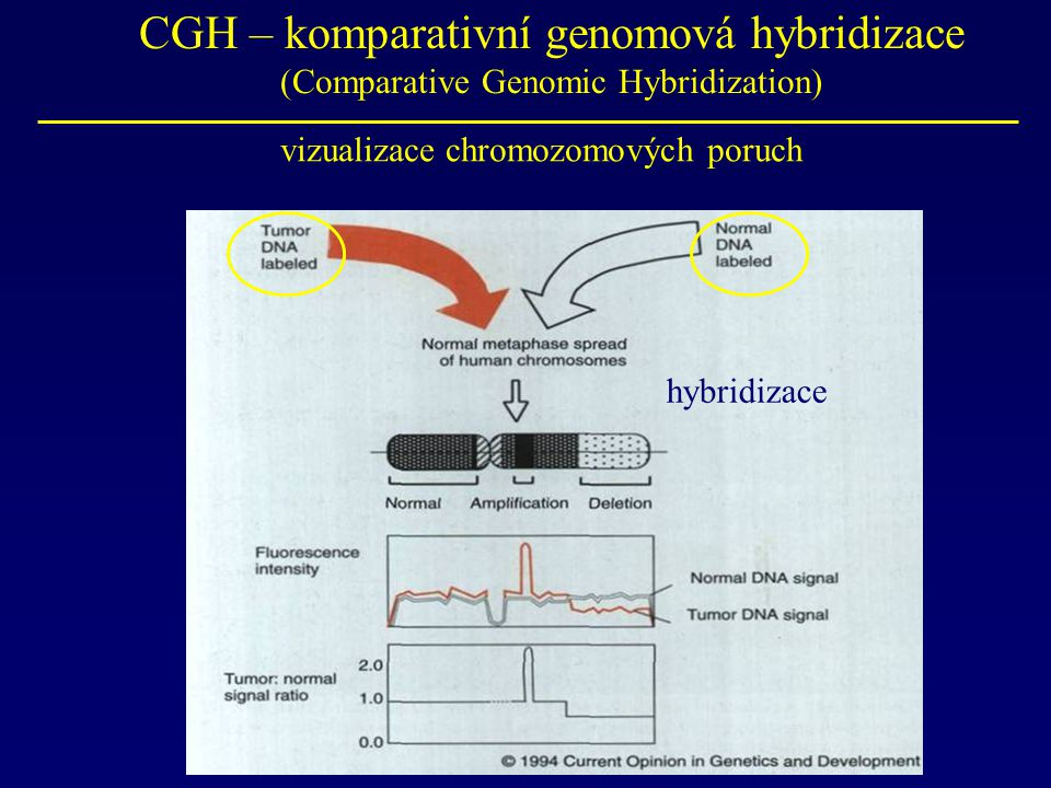 CGH – komparativní genomová hybridizace (Comparative Genomic Hybridization)