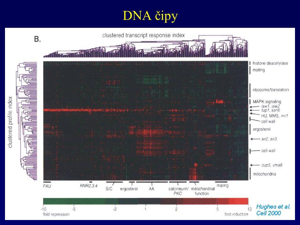 DNA čipy
