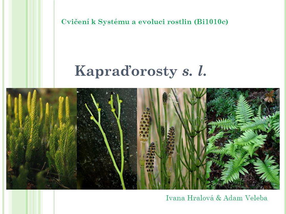 Cvičení k Systému a evoluci rostlin (Bi1010c)