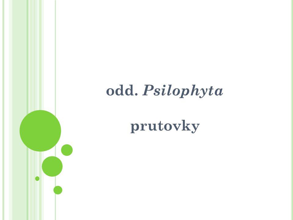 odd. Psilophyta prutovky