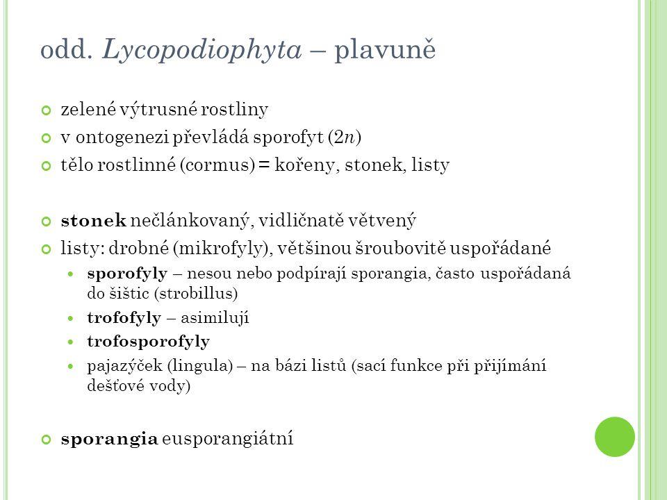 odd. Lycopodiophyta – plavuně