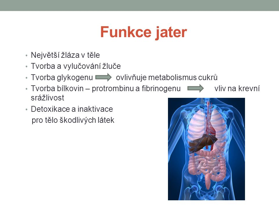Funkce jater Největší žláza v těle Tvorba a vylučování žluče