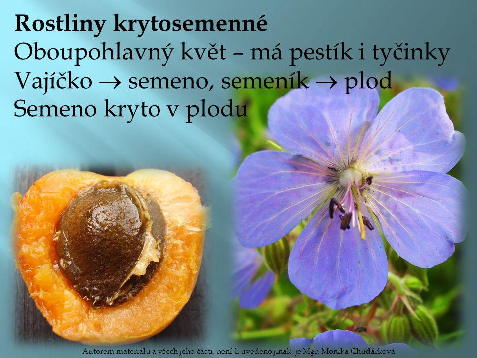 Rostliny krytosemenné Oboupohlavný květ – má pestík i tyčinky