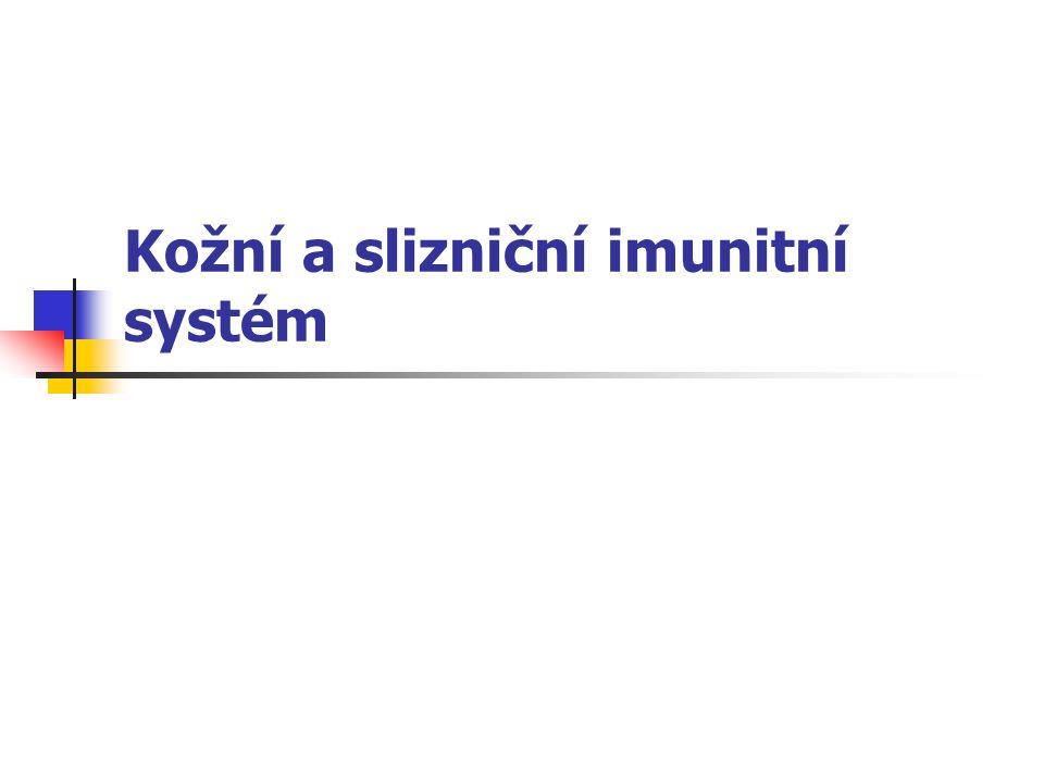 Kožní a slizniční imunitní systém