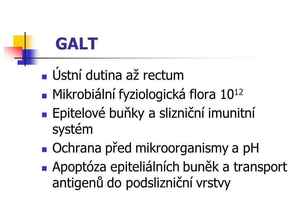 GALT Ústní dutina až rectum Mikrobiální fyziologická flora 1012