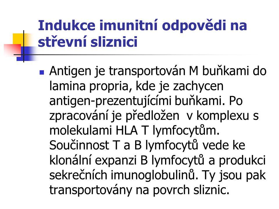 Indukce imunitní odpovědi na střevní sliznici