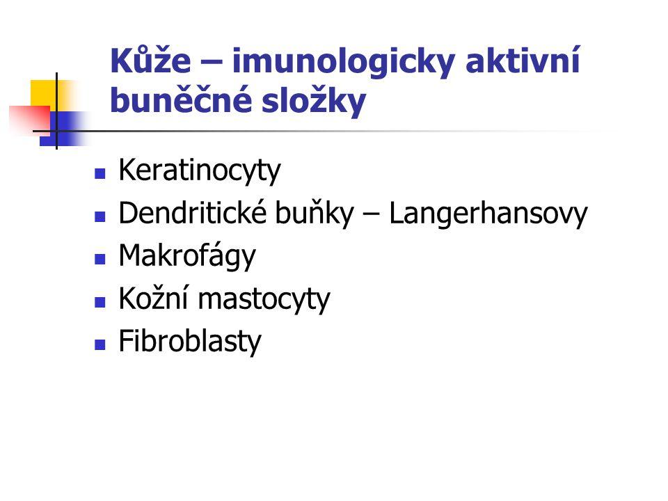 Kůže – imunologicky aktivní buněčné složky