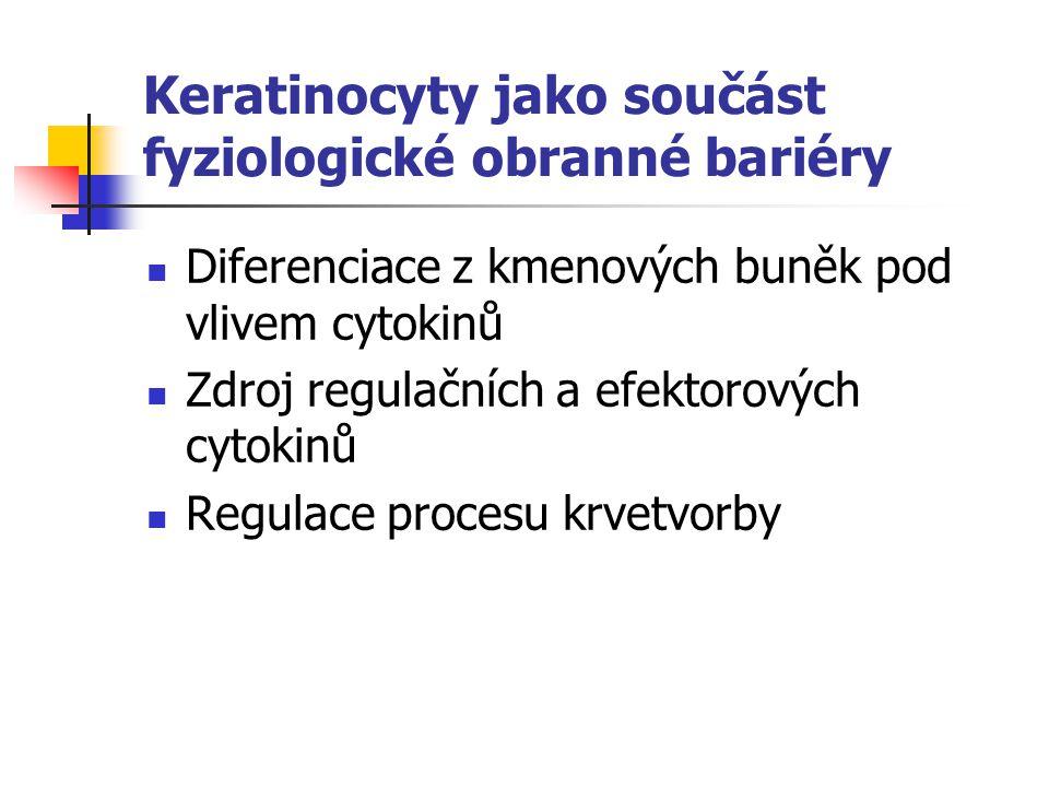 Keratinocyty jako součást fyziologické obranné bariéry