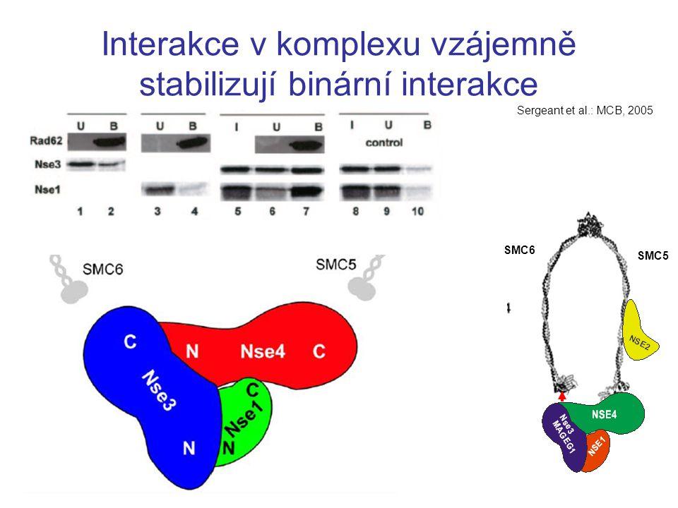 Interakce v komplexu vzájemně stabilizují binární interakce