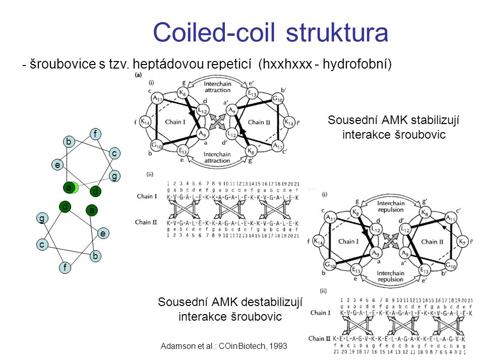 Coiled-coil struktura