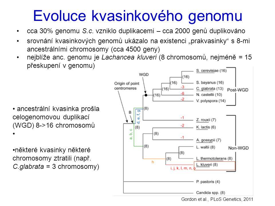 Evoluce kvasinkového genomu
