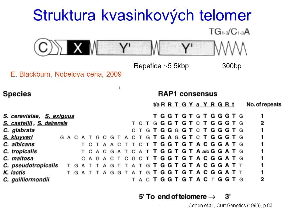 Struktura kvasinkových telomer
