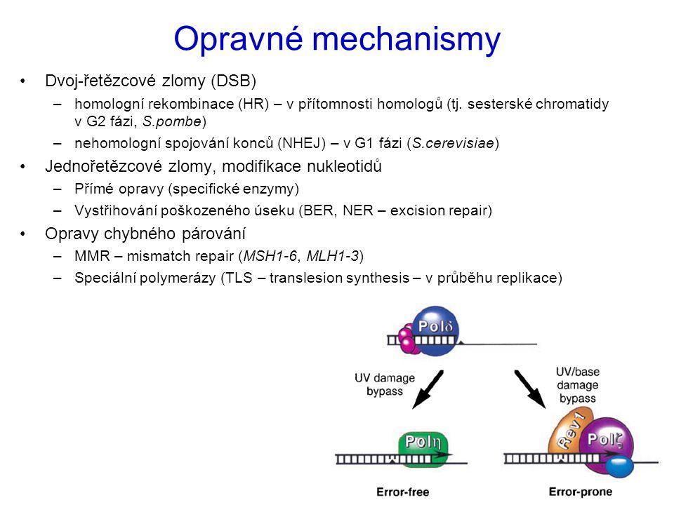 Opravné mechanismy Dvoj-řetězcové zlomy (DSB)