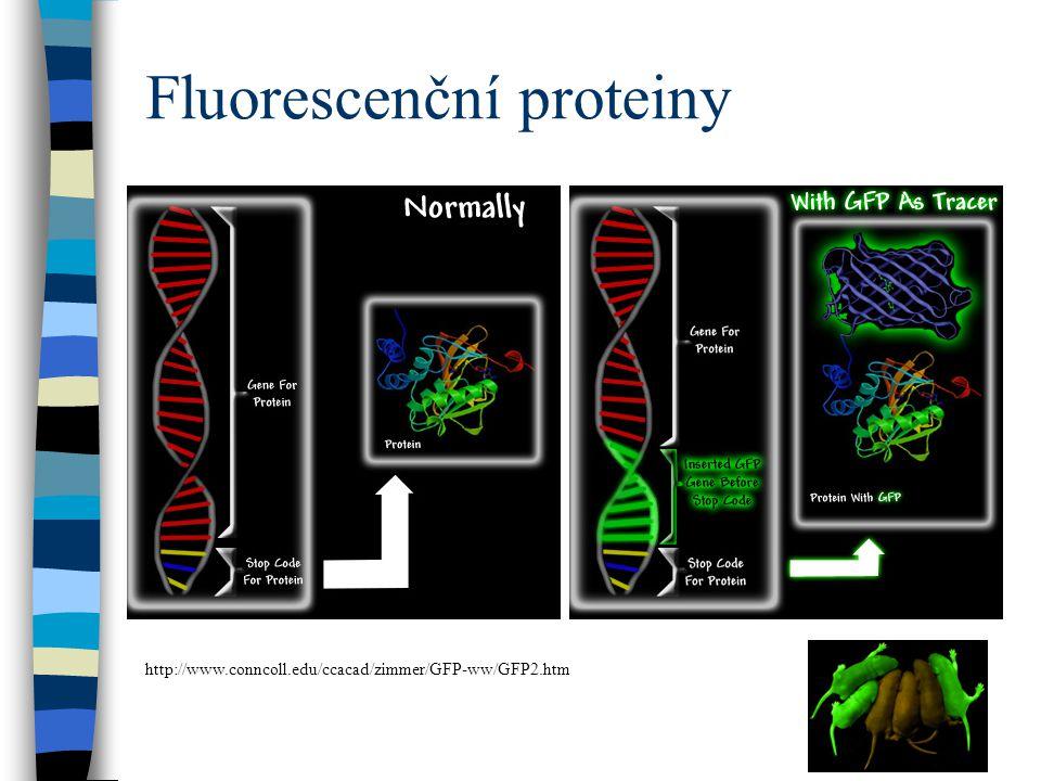 Fluorescenční proteiny