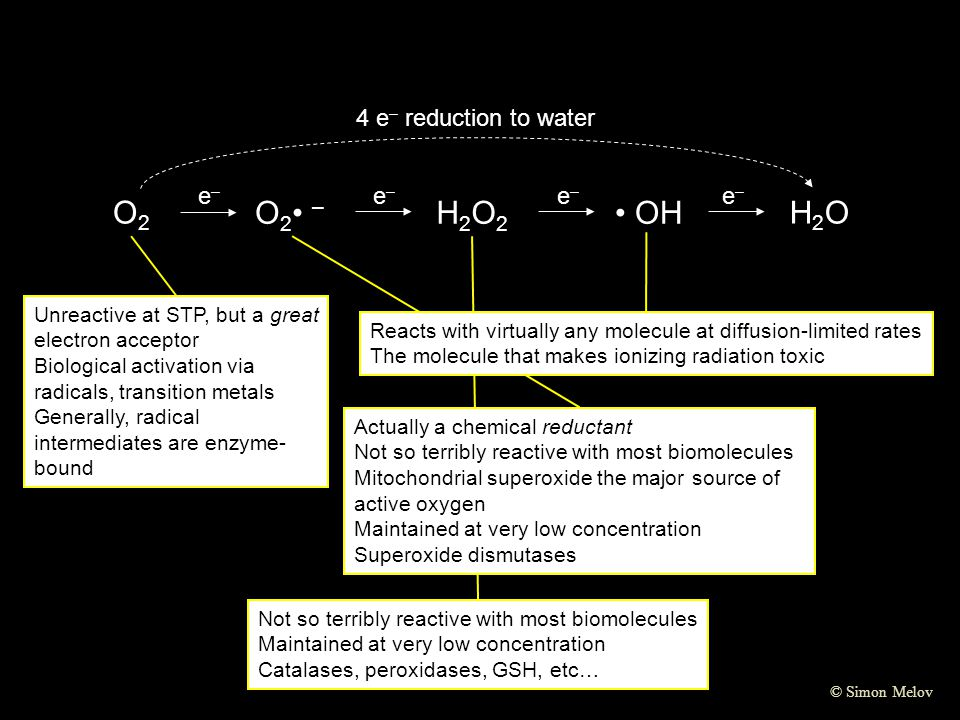 O2 O2• – H2O2 • OH H2O 4 e– reduction to water e–