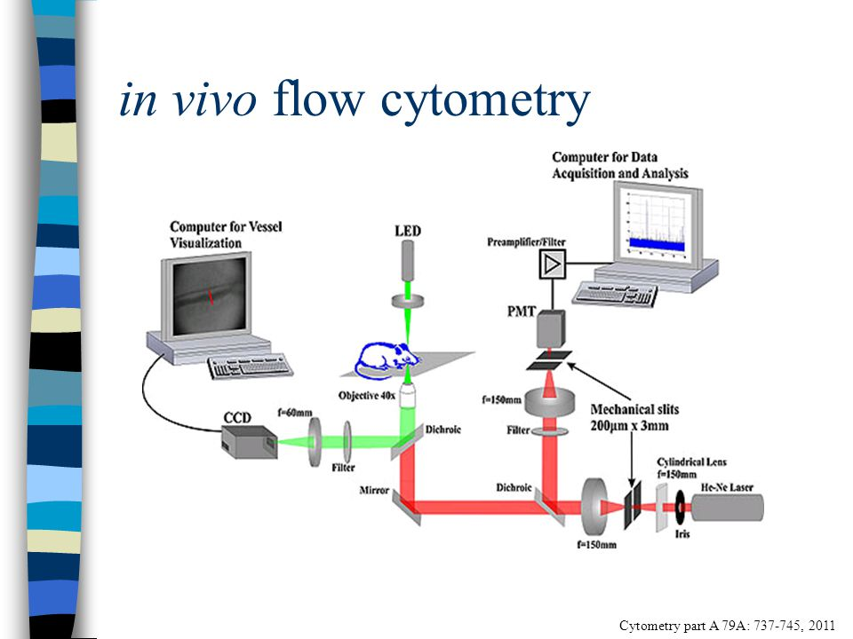 in vivo flow cytometry Cytometry part A 79A: 737-745, 2011