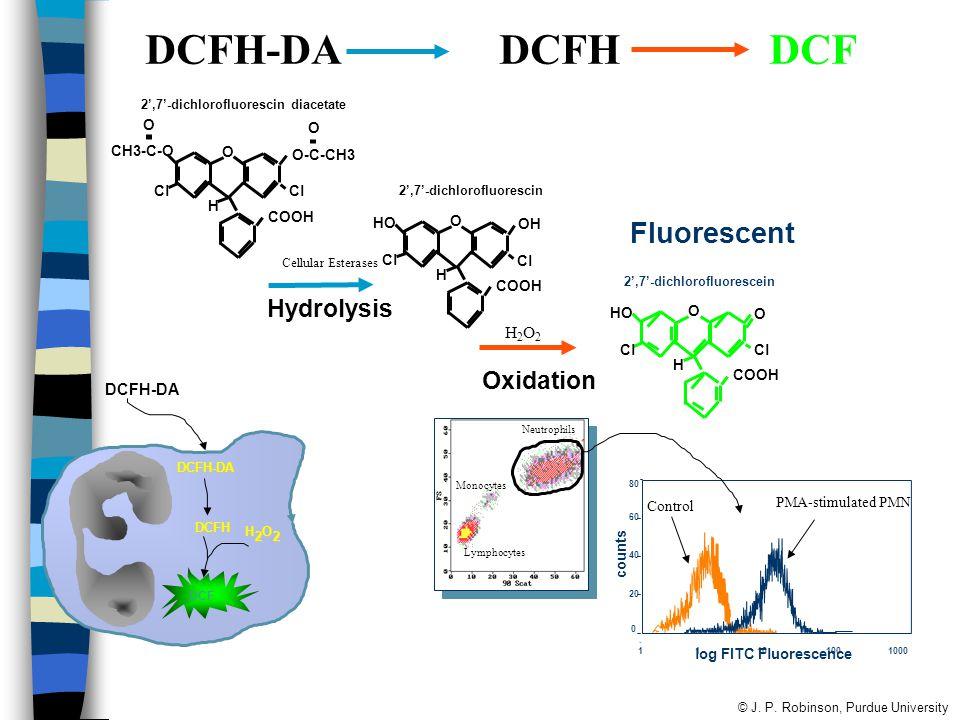 DCFH-DA DCFH DCF Fluorescent Hydrolysis Oxidation H2O2 DCFH-DA O