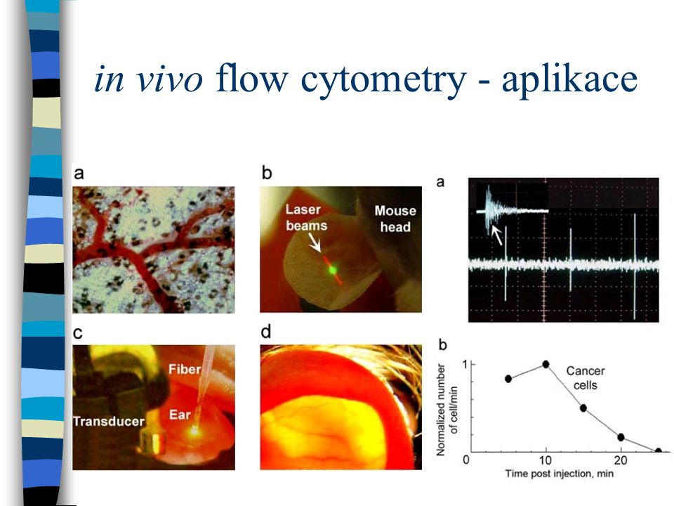 in vivo flow cytometry - aplikace