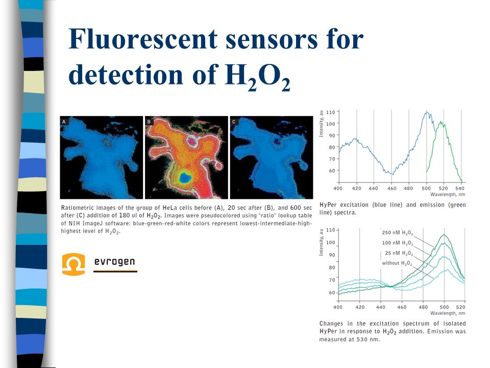 Fluorescent sensors for detection of H2O2