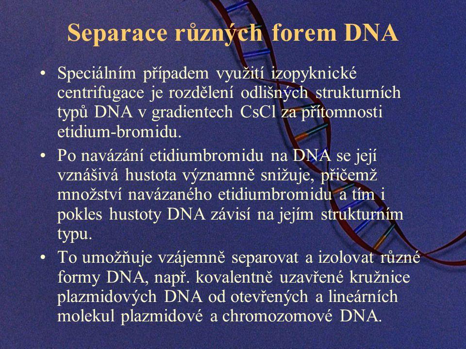 Separace různých forem DNA