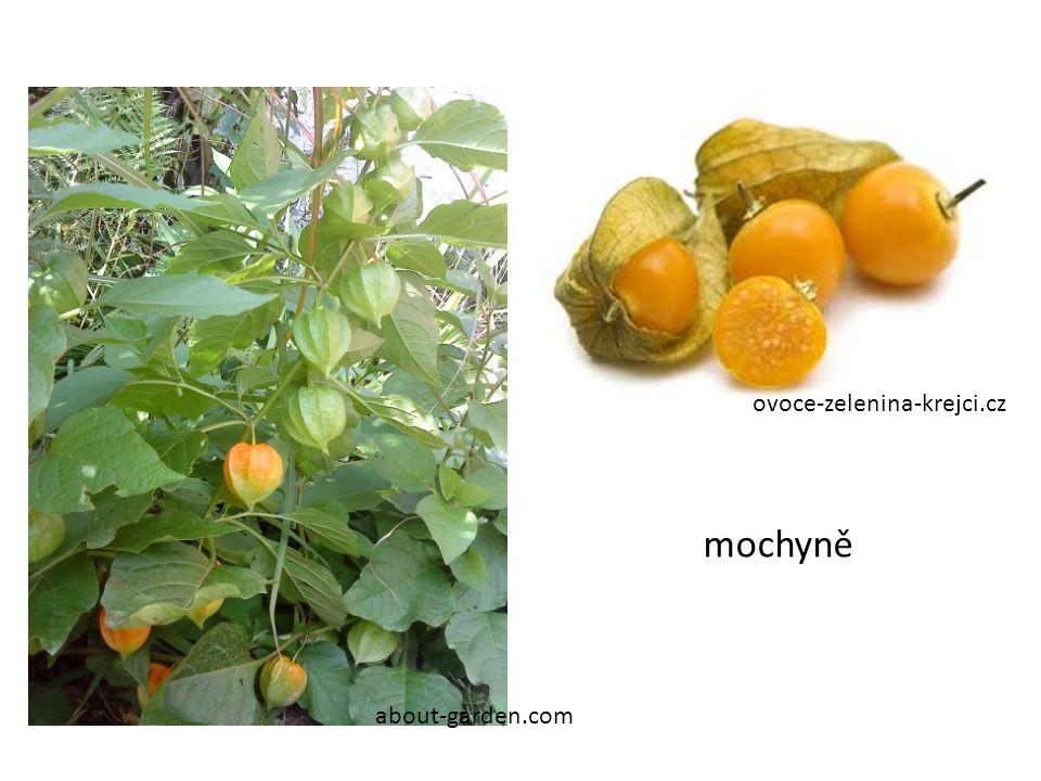 ovoce-zelenina-krejci.cz mochyně about-garden.com