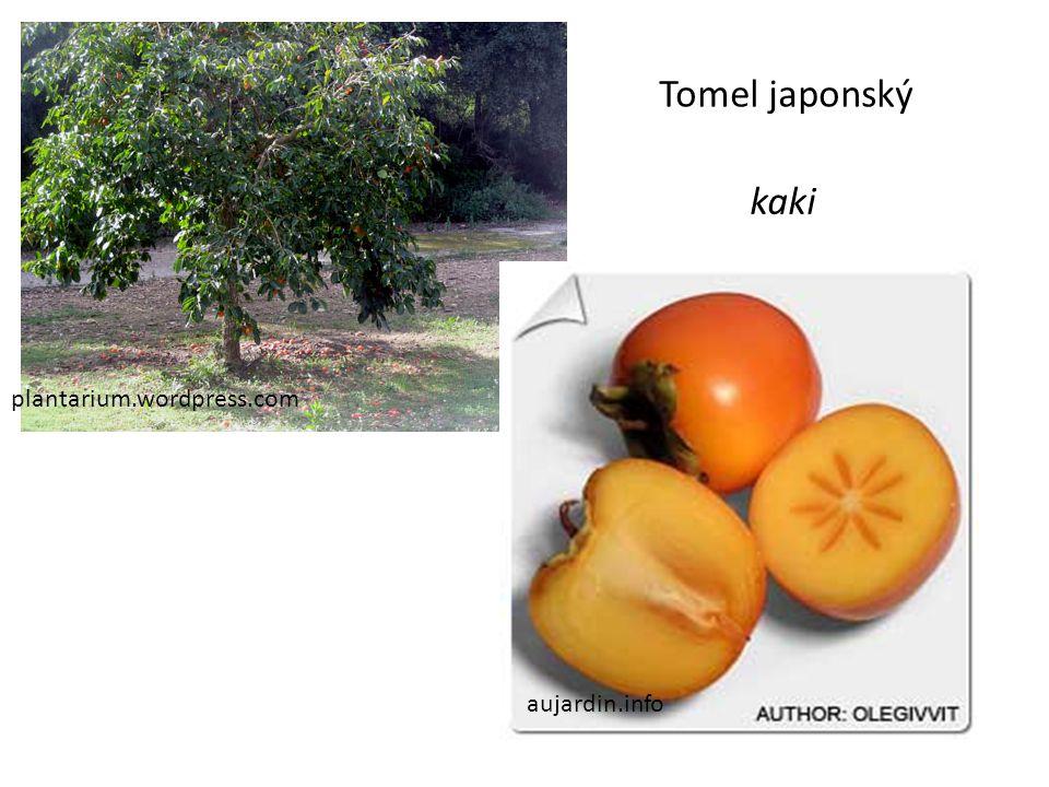 Tomel japonský kaki aujardin.info plantarium.wordpress.com