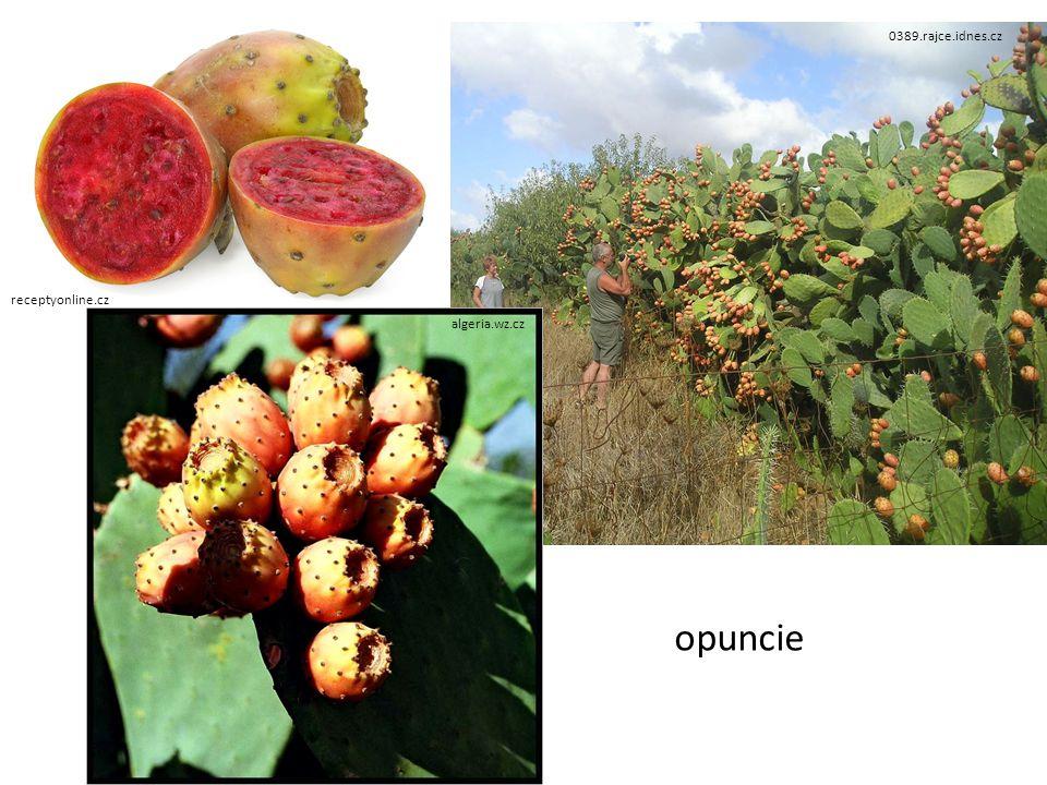 receptyonline.cz 0389.rajce.idnes.cz algeria.wz.cz opuncie