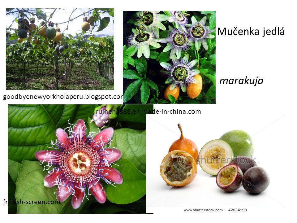Mučenka jedlá marakuja goodbyenewyorkholaperu.blogspot.com
