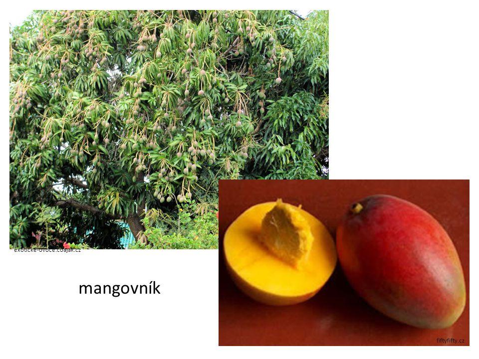 exoticke-ovoce.coajak.cz fiftyfifty.cz mangovník
