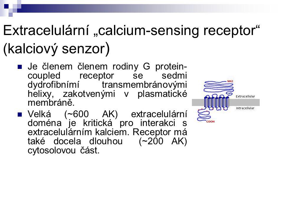 """Extracelulární """"calcium-sensing receptor (kalciový senzor)"""