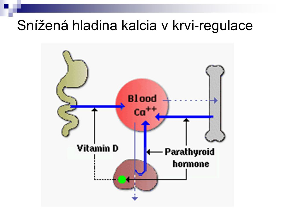 Snížená hladina kalcia v krvi-regulace