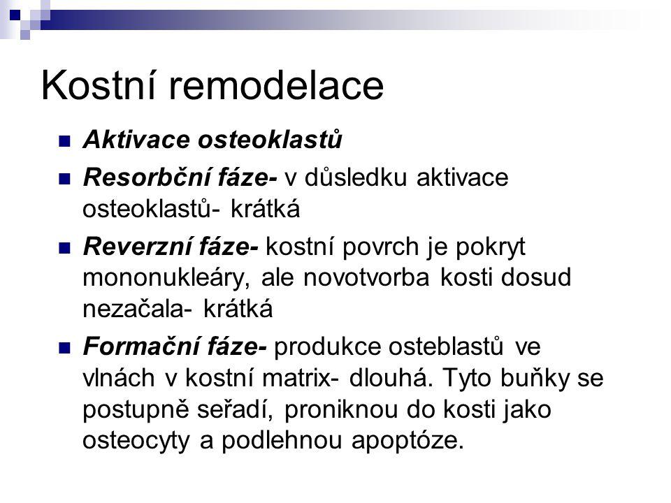 Kostní remodelace Aktivace osteoklastů