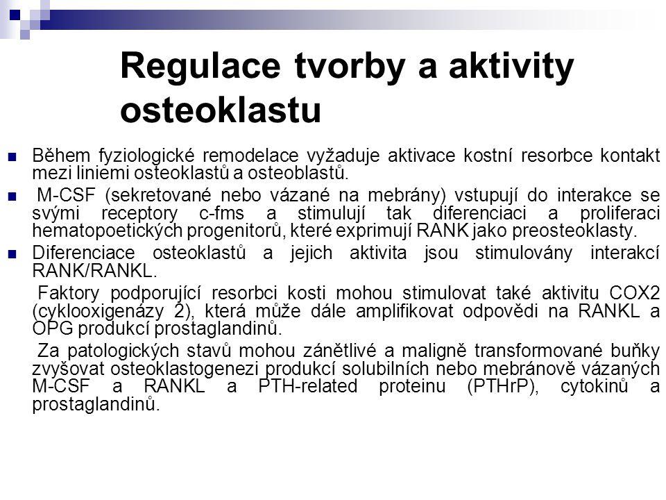 Regulace tvorby a aktivity osteoklastu