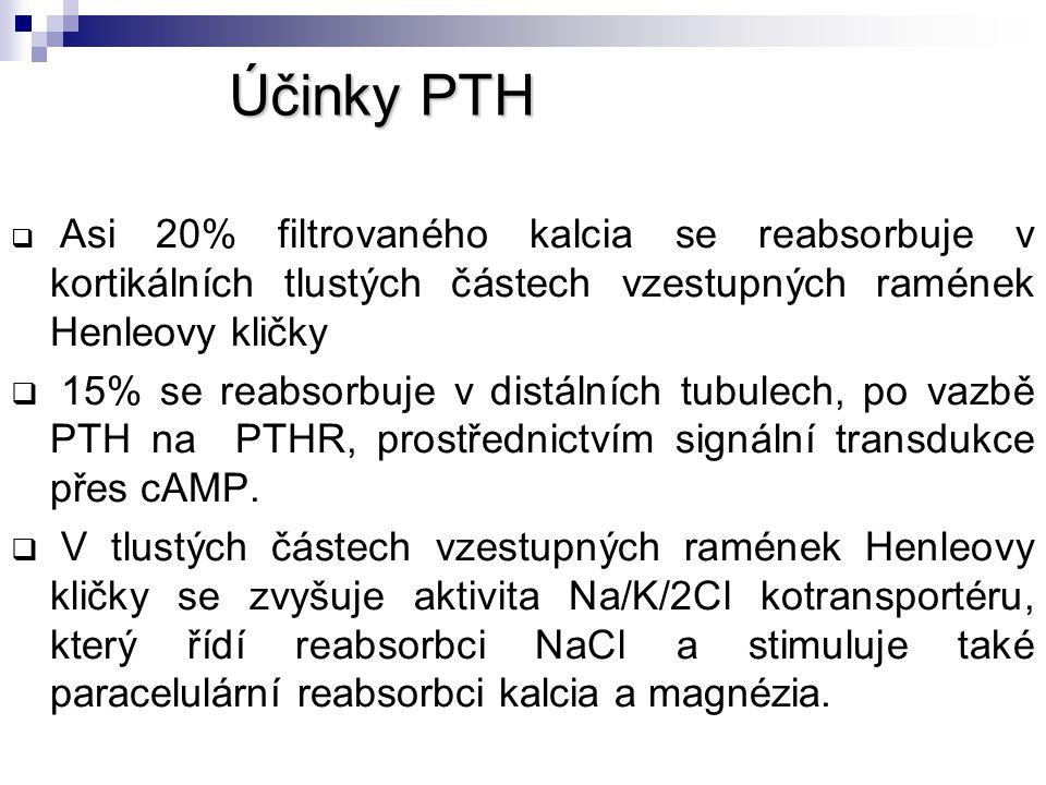 Účinky PTH Asi 20% filtrovaného kalcia se reabsorbuje v kortikálních tlustých částech vzestupných ramének Henleovy kličky.