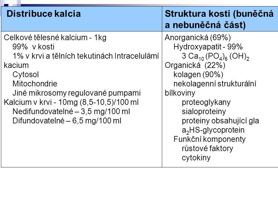 Struktura kosti (buněčná a nebuněčná část)