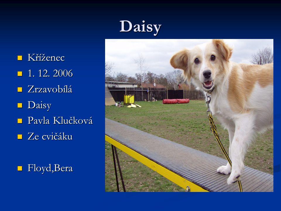 Daisy Kříženec 1. 12. 2006 Zrzavobílá Daisy Pavla Klučková Ze cvičáku