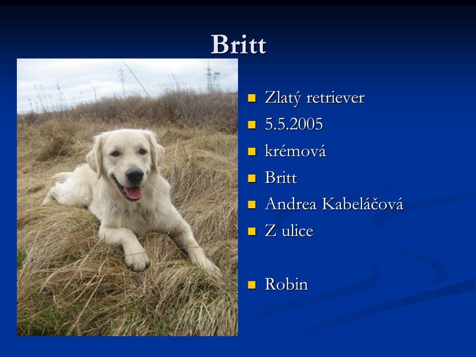 Britt Zlatý retriever 5.5.2005 krémová Britt Andrea Kabeláčová Z ulice