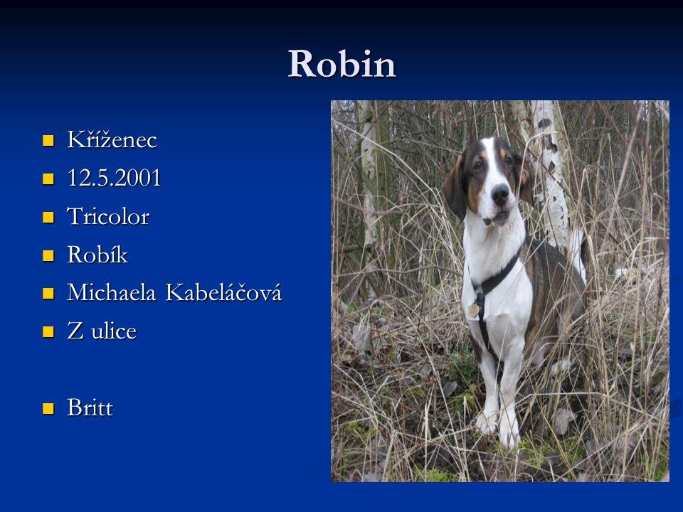 Robin Kříženec 12.5.2001 Tricolor Robík Michaela Kabeláčová Z ulice